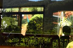 (lincoln koga) Tags: nature vidro azul 50mm pessoas nikon dof cotidiano paisagem amarelo observe jardim lugares lincoln vista campo urbano beleza luzes abstrato tempo reflexos galhos passeio momentos janelas olhares criao f12 cidades foco simplicidade semente desfoque observando koga manchas encontros aprendizado explorando chamado admirao suavidade contemplao ebf 2013 pedaosdemim expressando aguardo euvejo fragmentao lincolnkoga 50tinha novosrumos d7000 euencontro meutempo lincolnseijikoga novoslugares novosolhares meumomento acampamentomoriah meucampo refgiosecreto silncioreflexivo tempodesilncio meusencontros voudescobrindo vouexplorando ofertadeamor teentrego nossoviver tudoemmim aguardoporvoc