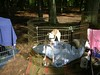 GreyhoundPlanetDay2008008