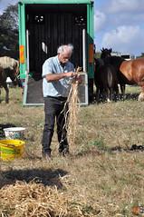 DSC_0074 (- MB Photo -) Tags: de cheval des 09 labour concours 07 vache tracteur vaches chevaux bourg comice agricole comptes 2013 bourgdescomptes  labourer