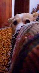 BAMBINA (CiaoMayonga) Tags: city family dog color familia famiglia ciudad colores naranja mascota bambina mayonga mayongacom