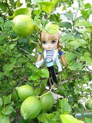 Peach on lemon tree....