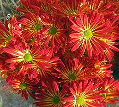 Fall flowers (carpingdiem) Tags: flowers