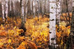 { Late Autumn Glow } (Boreal Bird) Tags: hss lateautumn autumnglow thegiftthatkeepsongiving sliderssunday theunderstoryisunderappreciated ataleoftheunderstory lateautumnisunderrated