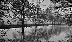 November grau - November grey (fleckchen) Tags: november deutschland wasser nebel herbst natur sachsen schwarzweiss