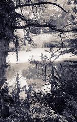 Pond in Bourgogne (JB Morlot) Tags: reflection tree heritage film monochrome sepia forest mediumformat landscape countryside pond solitude loneliness fuji burgundy decorative fineart calm nostalgia silence serenity duotone 6x9 dreamy meditation wilderness relaxation eternity bourgogne largeformat mystic timeless otherworld tranquillity fujigsw690iii