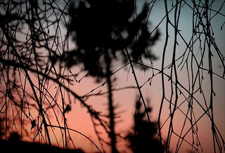 Today's sunrise (4)