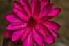 BI0A3728-W (Raghu Varun Dev Tanna) Tags: travel water canon photography eos lotus passion hyderabad photogrpahy hyderabadweekendshoots canoneos5dmkiii