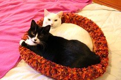 Happy Girls (hqqnW) Tags: white cat heidi bed tuxedo ladybird