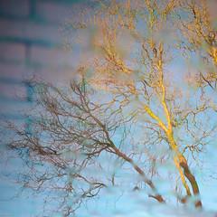 Mirror on the Wall (Tijmon Kater) Tags: street reflection tree square mirror nikon boom willow squareformat nikkor babylon plas wilg straat salix reflectie pudle babylonica kronkelwilg 35mmf18g tijmonkater