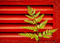 Fougère (josboyer) Tags: jardinbotaniquedemontréal