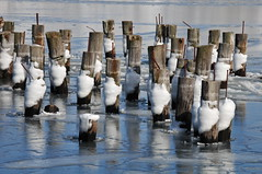Winter Pilings (Insearchoflight) Tags: winter ice newfoundland reflections nikon rust labrador pilings nl icereflections icelolipops skyoverice skyonice