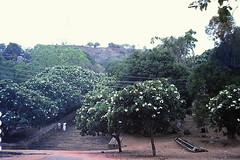 Mihinthale Steps, Anuradhapura, Sri Lanka (Anand Leo) Tags: archaeology plumeria buddhism srilanka anuradhapura araliya templetrees mihinthalesteps