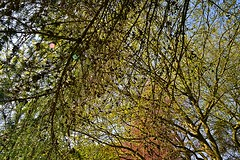 Growth and colour (Lord Cogsby) Tags: park colour branches growth cones a