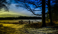 Paddock Dweller (Trev Bowling) Tags: snow forest landscape nikon gate pony nationaltrust paddock 2015 clumberpark d3200