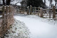 Snow - 36/365