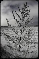 Shy winter (Shyha) Tags: winter snow canon poland polska fisheye mc zenitar zima śnieg 6d silesia śląsk