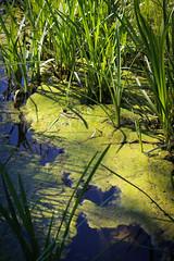 Printemps (Valrie Grcevic) Tags: france nature fleurs soleil photographie lumire vert plantes isre valeriegrcevic