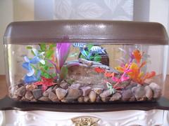 Playscale 1:6 Aquarium 1 of 2 (suekulec) Tags: lights aquarium doll furniture gloria 16 diorama playscale
