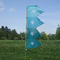 _Capture the Flag_DSC06708 (Ian Gearing) Tags: park uk trees england west nature woodland arboretum gloucestershire westonbirt trust glos