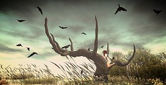 the dark tree.....crow (chanell.resident) Tags: tree pose dark lost dream crow raven sim