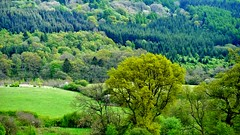 Forge Valley, May 2016 (Clive Hicks) Tags: green yorkshire north valley fujifilm forge xe2
