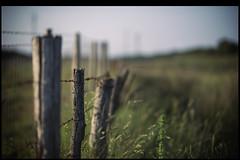 en un cementerio de lugar castellano (joaaglera) Tags: light verde green luz rural fence libertad freedom nikon dof country desenfoque campo nikkor hff d610 105mmf2ddc