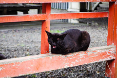 Today's Cat@2016-05-28 (masatsu) Tags: cat pentax catspotting mx1 thebiggestgroupwithonlycats