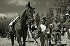Con mi caballo (Josinisam) Tags: copyright caballos valladolid medinaderioseco nikond7000 josinisam joseignaciosantamaria