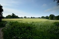 The harvest ripens (smcnally24601) Tags: morning england sun spring village britain surrey betchworth