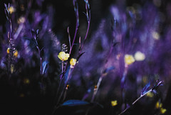 Purple Nature (The Daniel Garca) Tags: film lomo lomography purple phototgraphy lomochrome