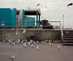 New Brighton (emilyjasper) Tags: travel newzealand seagulls film birds landscape photography fuji contemporary documentary roadtrip ishootfilm explore analogue newbrighton filmisnotdead emilyjasper fujigw670