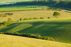 Eclogue (S l a w e k) Tags: uk england tree green field rural landscape sussex countryside nationalpark spring brighton outdoor meadow sunny hills lone pastoral rolling southdowns