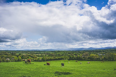 (Ails N hgeartaigh) Tags: world ireland sky mountains nature animals clouds zeiss landscape outside countryside scenery europe cows outdoor earth sony scenic bluesky fields za a7 kildare 2016