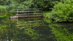 Brhlweiher in Forest (KF-Photo) Tags: steg schnbuch spiegelungen holzsteg pentaxa1750 brhlweiher