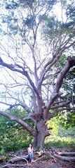 Under the mango tree (Twilight Tea) Tags: philippines april valeria elnido palawan 2016 taoexpedition httptaophilippinescom