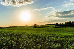 Sunset Over the Corn Fields (R3D_Photography) Tags: sunset ny newyork countryside corn country farming farmland fields setting fingerlakes r3dphotography raysheleyiii