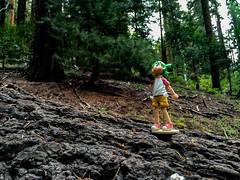 IMG_8685.jpg (edcool1_1) Tags: oakhurst california unitedstates us yotsuba yotsubato revoltech yotsubayosemite         neldergrove shadowofthegiants sequoia redwood giantredwoods forest trees