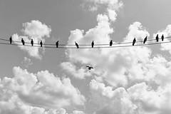 pigen bw (abtabt) Tags: sky cloud wire cable sarawak malaysia bau kuching pigen siniawan d7001835g