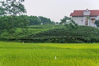 thai nguyen - vietnam 8