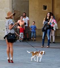 """Poodle"" - Krakow, Poland (TravelsWithDan) Tags: puppy europe candid streetphotography poland krakow prettywoman"