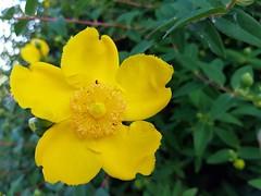 #fiore (Mastercaio76) Tags: fauna flora natura fiori fiore pianta allaperto