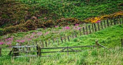 Old railway fence. (artanglerPD) Tags: old red fence wire gates rusty railway posts barbed campion whins