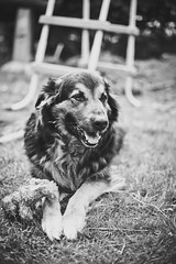 Luna (jr_moon) Tags: blackandwhite bw dog pet cute animal dof bokeh hund schwarzweiss haustier tiefenschrfe