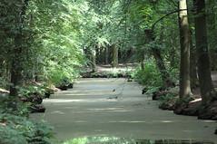 Bos - Forrest - Explored (eric zijn fotoos) Tags: landscape forrest bos landschap nikond90 nikkor40mmmicrof28