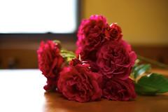 Rosa (ai3310X) Tags: rose md minolta none 50mmf14  rokkor