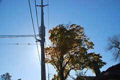 fall_296 (Sascha G Photography) Tags: autumn trees toronto color tree fall leaves leaf nikon seasons waterfront lakeshore indiansummer d60