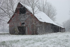 Snow falls on the old red barn. (Gerald Barnett) Tags: morning schnee trees winter red usa white snow building abandoned nature beautiful beauty barn rural buildings outdoors snowflakes grey illinois nikon mood rustic gray barns shed tranquility atmosphere naturallight oldbuildings calm oldbarns faded neve snowing neige wintertime inspirational contemplative derelict tranquil oldbuilding nix oldwood decayed snowscape snowscene oldbarn naturalcolors ruralamerica neive southernillinois oldshed ruralscenery naturalcolor rurallandscape ruralpic