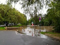 Dbordement (dbrothier) Tags: flood riviere 100v10f crue 2016 debordement yerres brunoy