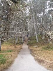 Dead Wood (pilvibongari) Tags: california pointlobos big sur