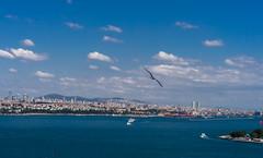 DSC00329-2 (UmitCukurel) Tags: turkey seagull sony turkiye istanbul pajaro bosphorus marti lightroom galata goldenhorn halic a7ii